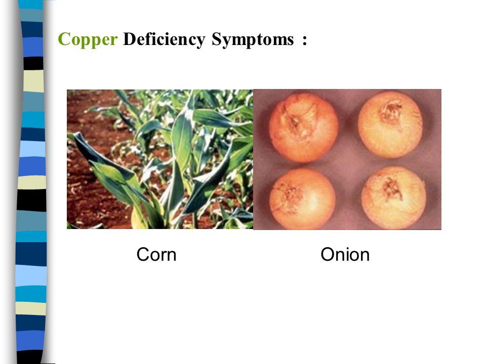 Copper Deficiency Symptoms :