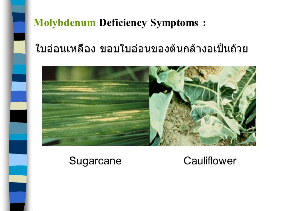 Molybdenum Deficiency Symptoms :