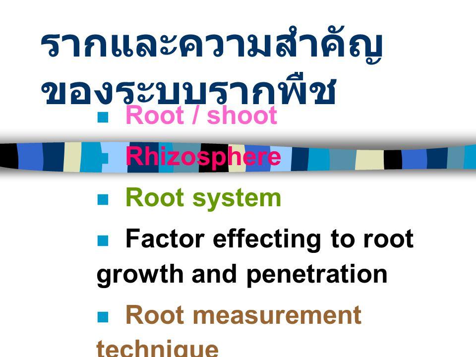 รากและความสำคัญของระบบรากพืช