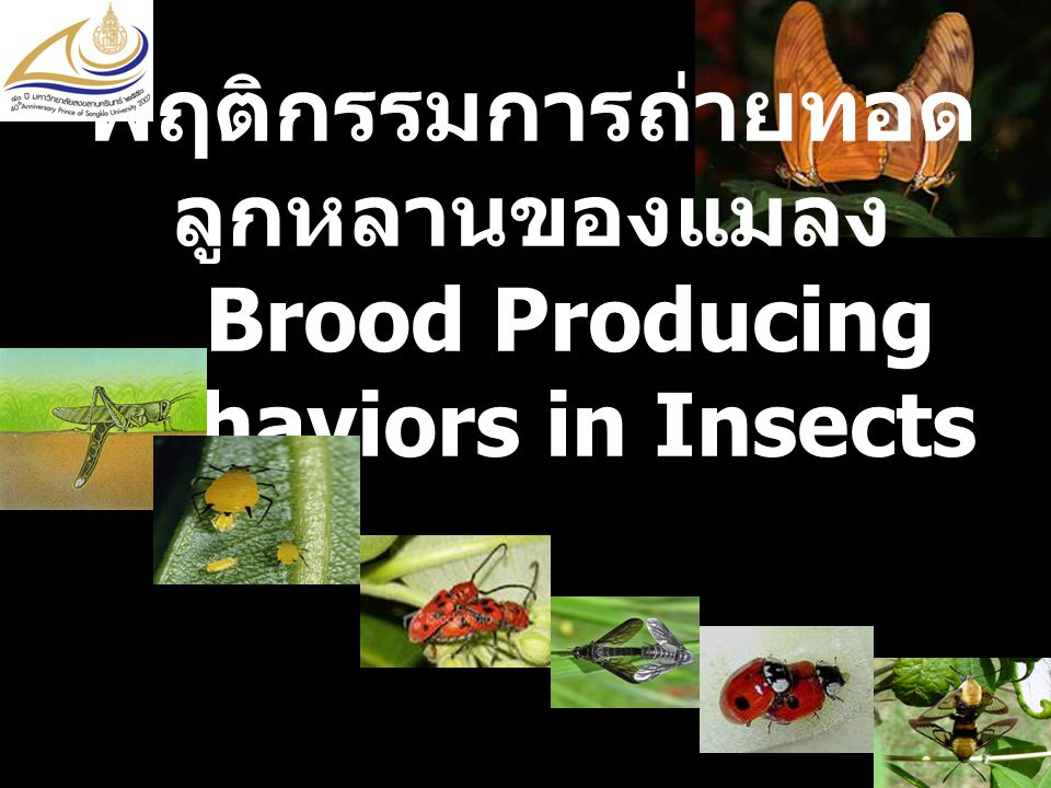 พฤติกรรมการถ่ายทอดลูกหลานของแมลง Brood Producing Behaviors in Insects