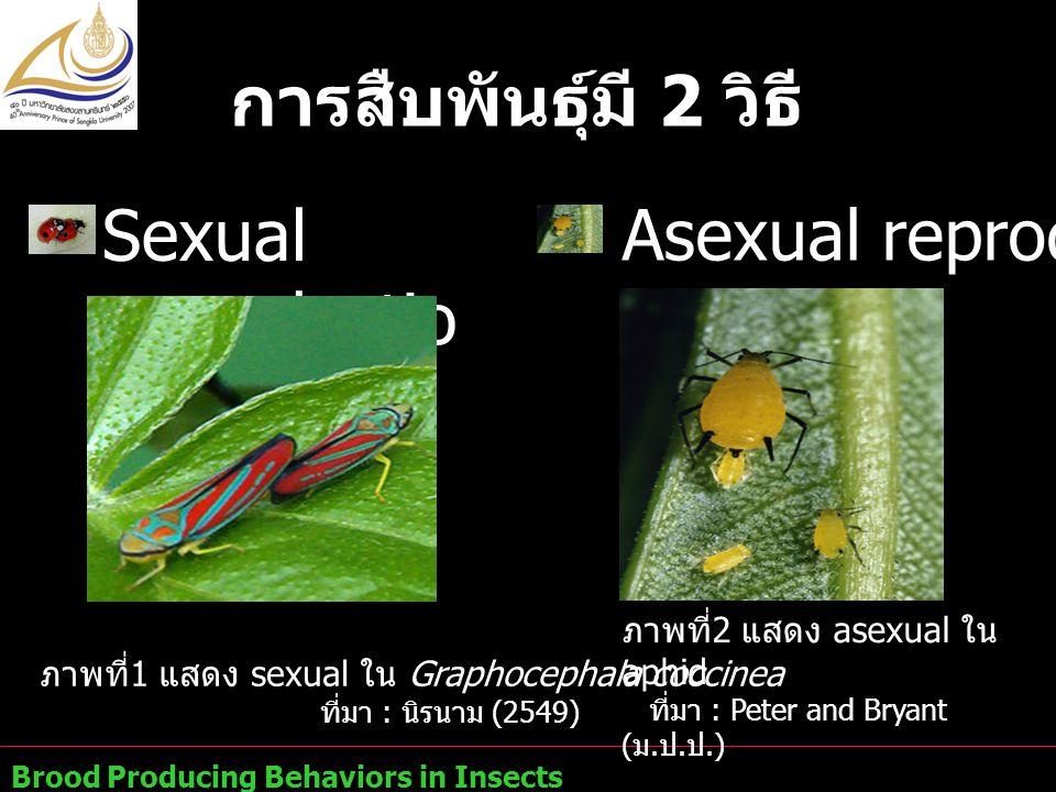 การสืบพันธุ์มี 2 วิธี Asexual reproduction Sexual reproduction
