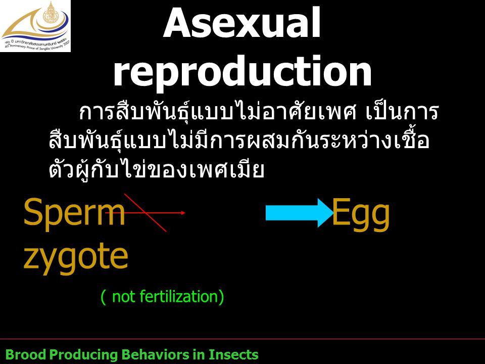 Asexual reproduction การสืบพันธุ์แบบไม่อาศัยเพศ เป็นการสืบพันธุ์แบบไม่มีการผสมกันระหว่างเชื้อตัวผู้กับไข่ของเพศเมีย.