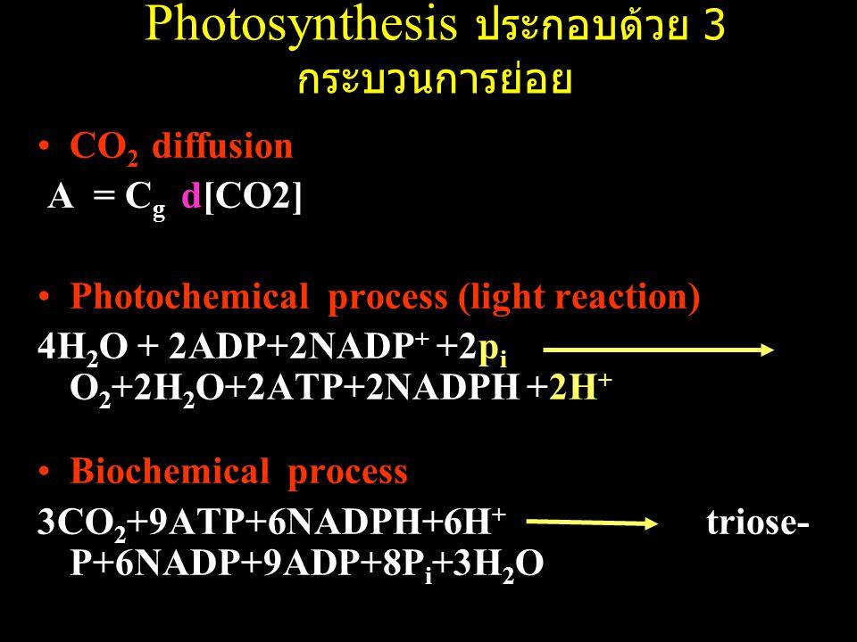 Photosynthesis ประกอบด้วย 3 กระบวนการย่อย