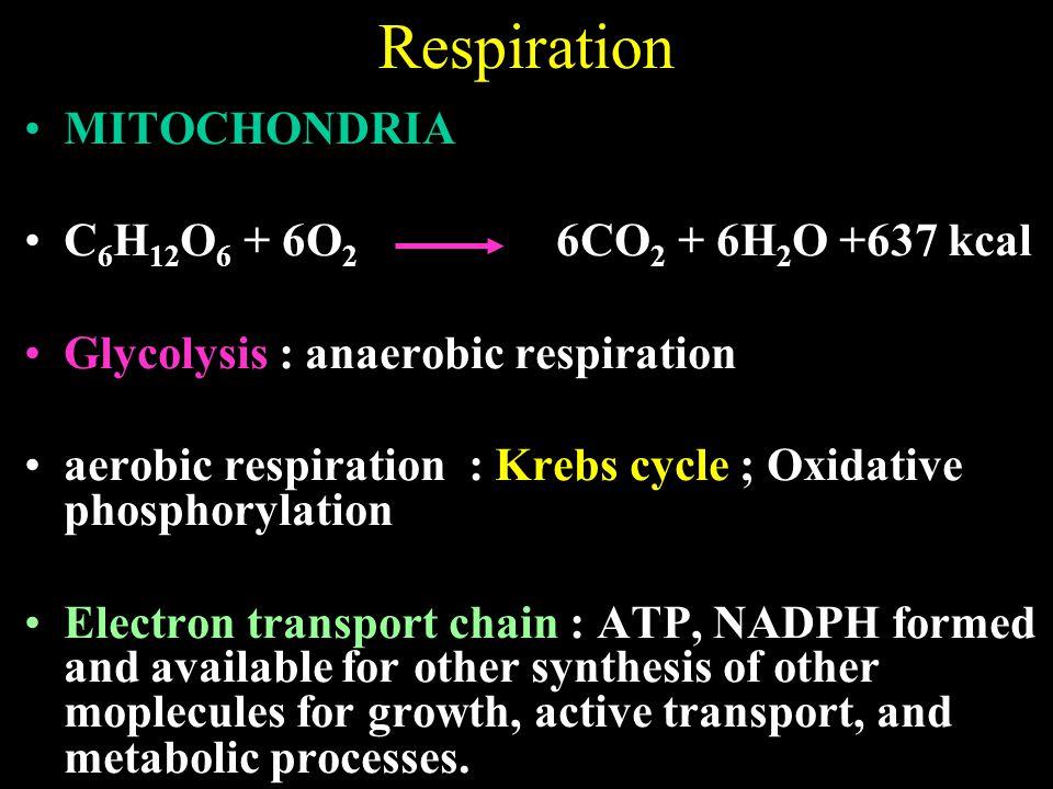 Respiration MITOCHONDRIA C6H12O6 + 6O2 6CO2 + 6H2O +637 kcal