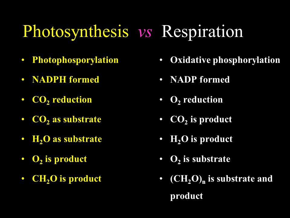 Photosynthesis vs Respiration