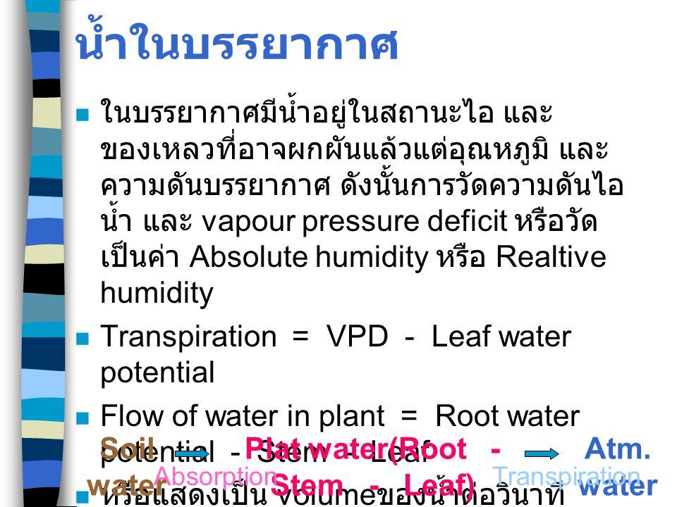 Plat water(Root - Stem - Leaf)