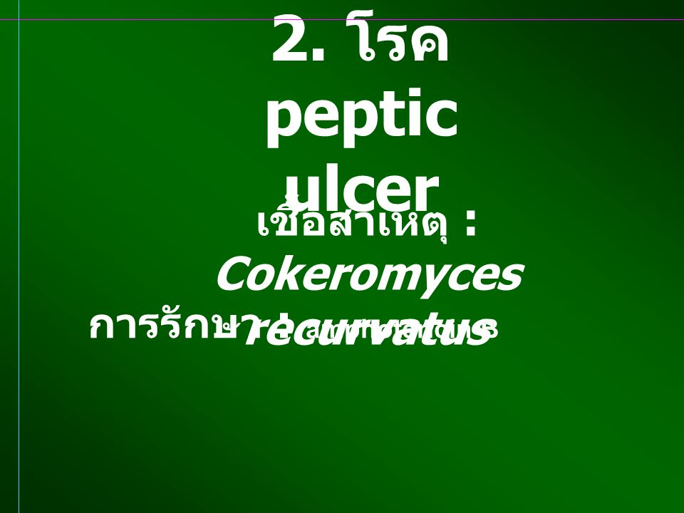 การรักษา : amphotericin B