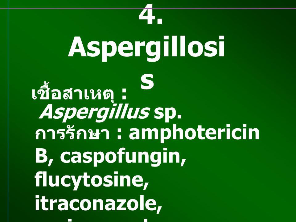 4. Aspergillosis เชื้อสาเหตุ : Aspergillus sp.