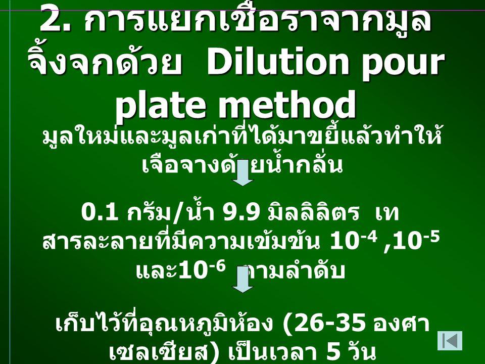 2. การแยกเชื้อราจากมูลจิ้งจกด้วย Dilution pour plate method