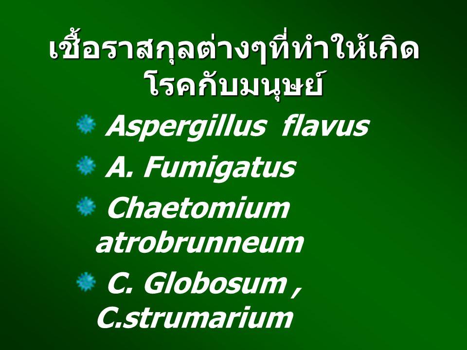 เชื้อราสกุลต่างๆที่ทำให้เกิดโรคกับมนุษย์