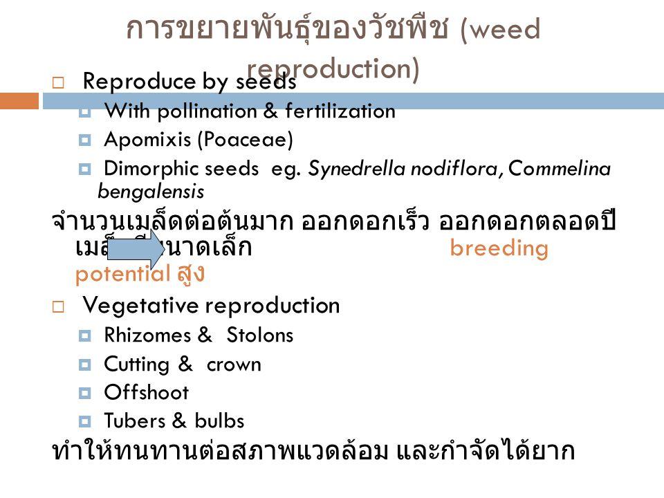 การขยายพันธุ์ของวัชพืช (weed reproduction)