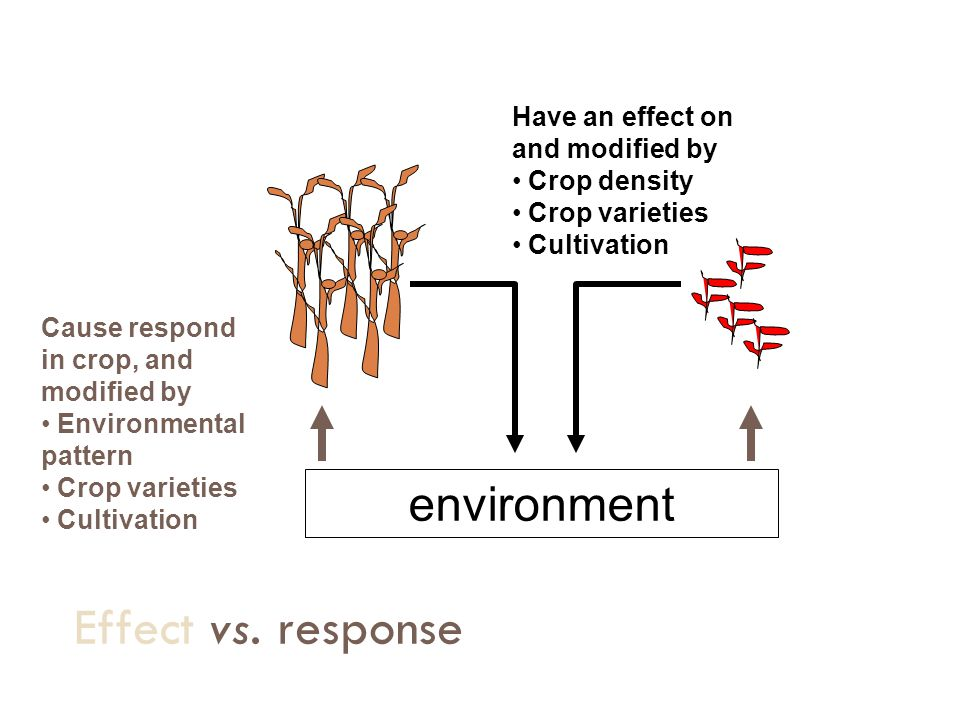 Effect vs. response environment Have an effect on and modified by