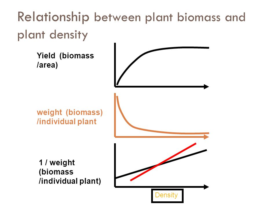 Relationship between plant biomass and plant density