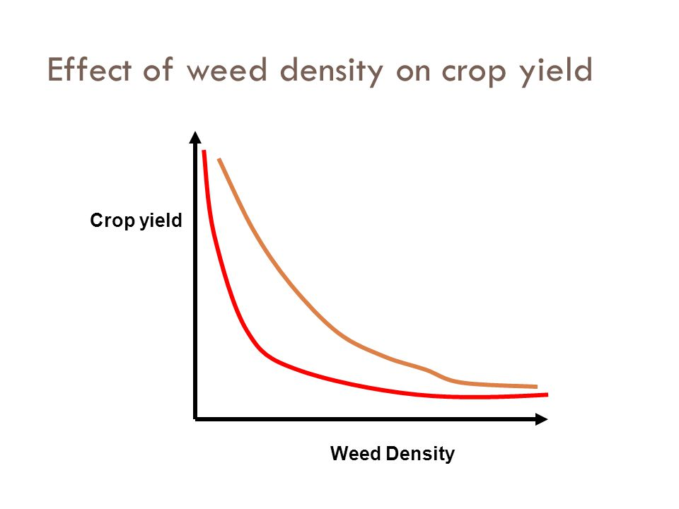 Effect of weed density on crop yield