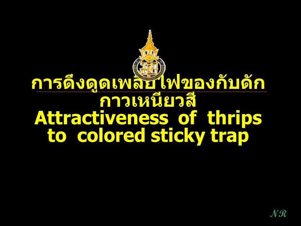 การดึงดูดเพลี้ยไฟของกับดักกาวเหนียวสี Attractiveness of thrips to colored sticky trap