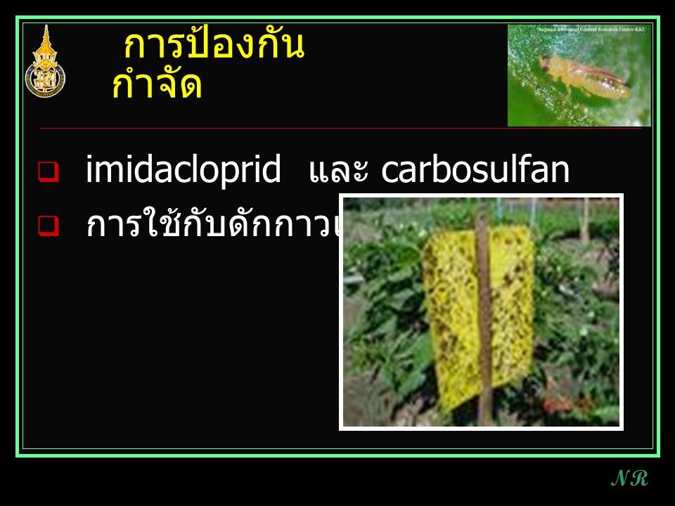 การป้องกันกำจัด imidacloprid และ carbosulfan การใช้กับดักกาวเหนียว NR