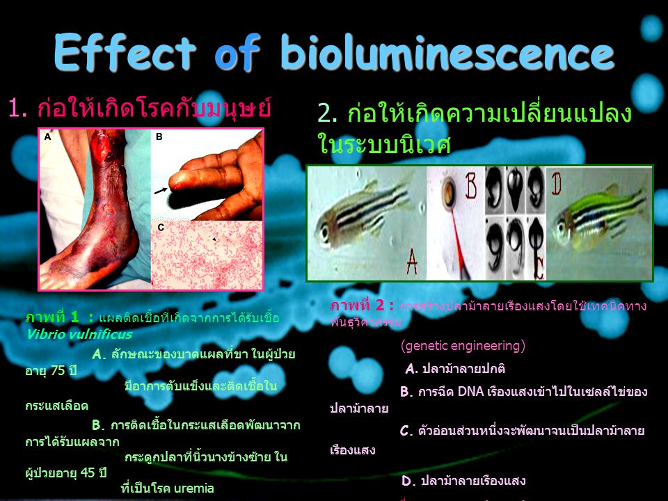 Effect of bioluminescence
