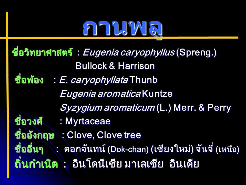 กานพลู ชื่อวิทยาศาสตร์ : Eugenia caryophyllus (Spreng.)