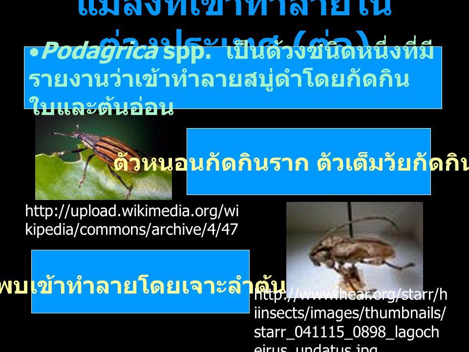 แมลงที่เข้าทำลายในต่างประเทศ (ต่อ)