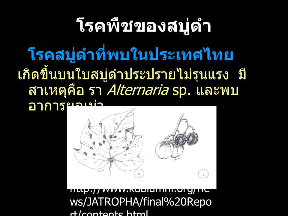 โรคพืชของสบู่ดำ โรคสบู่ดำที่พบในประเทศไทย. เกิดขึ้นบนใบสบู่ดำประปรายไม่รุนแรง มีสาเหตุคือ รา Alternaria sp. และพบอาการผลเน่า.