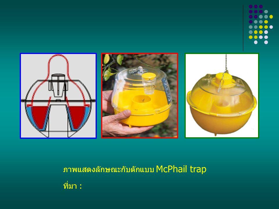 ภาพแสดงลักษณะกับดักแบบ McPhail trap