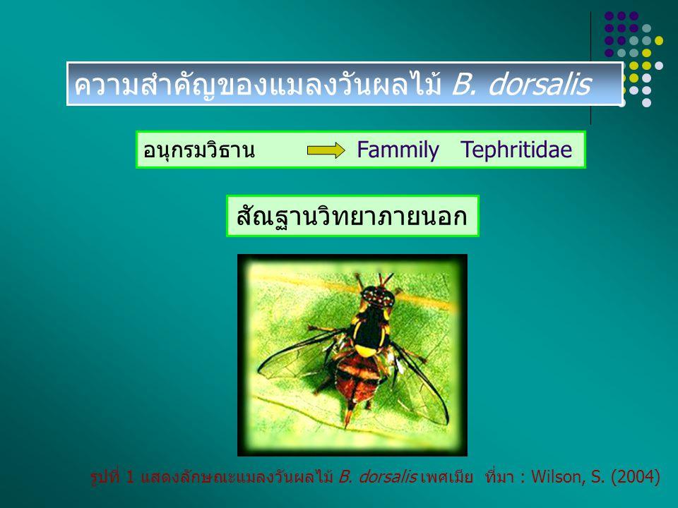 ความสำคัญของแมลงวันผลไม้ B. dorsalis