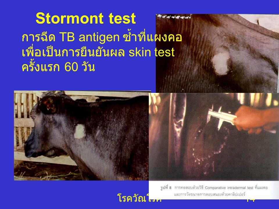 Stormont test การฉีด TB antigen ซ้ำที่แผงคอ เพื่อเป็นการยืนยันผล skin test ครั้งแรก 60 วัน.