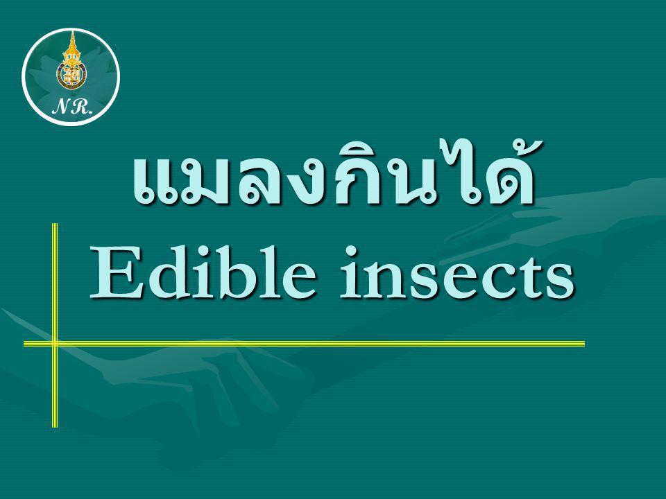 แมลงกินได้ Edible insects