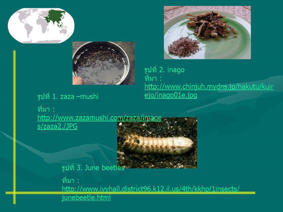 รูปที่ 2. inago ที่มา : http://www.chinjuh.mydns.jp/hakutu/kuirejo/inago01e.jpg. รูปที่ 1. zaza –mushi.
