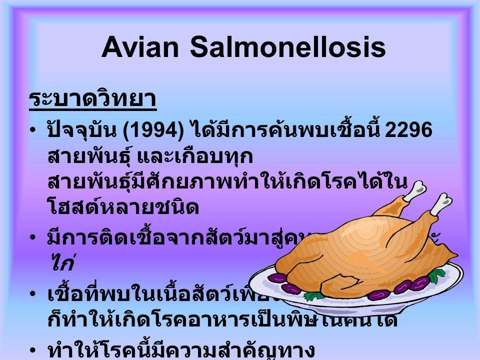 Avian Salmonellosis ระบาดวิทยา