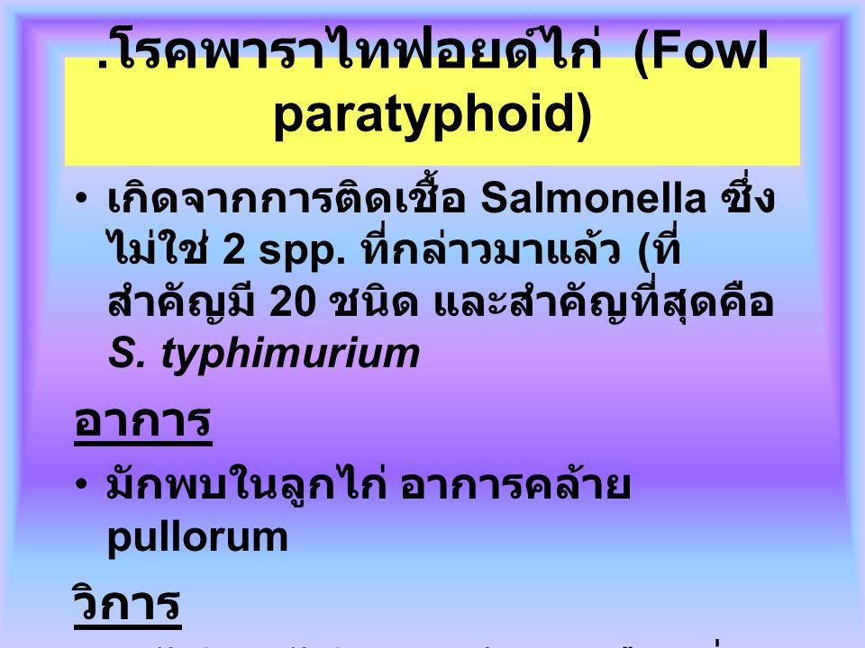 .โรคพาราไทฟอยด์ไก่ (Fowl paratyphoid)