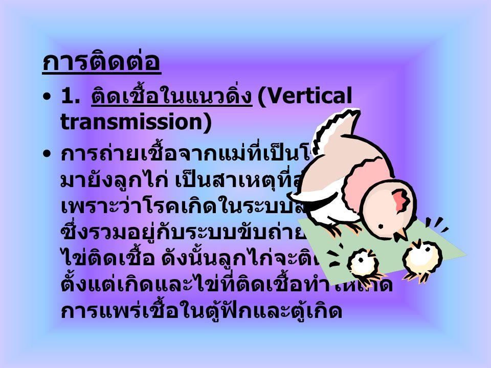 การติดต่อ 1. ติดเชื้อในแนวดิ่ง (Vertical transmission)