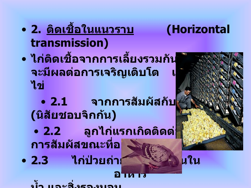 2. ติดเชื้อในแนวราบ (Horizontal transmission)