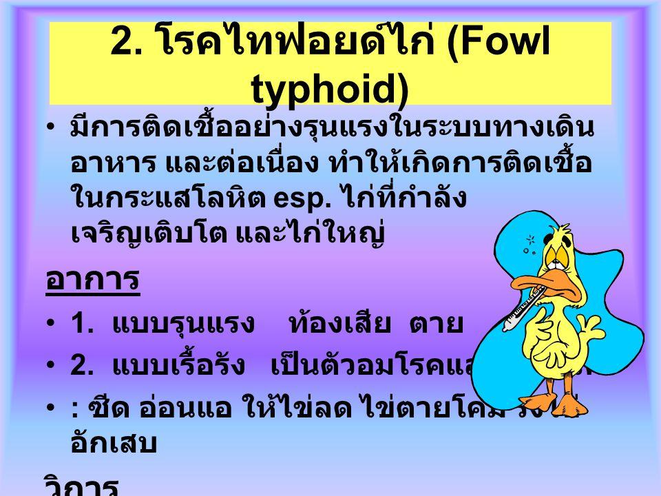 2. โรคไทฟอยด์ไก่ (Fowl typhoid)