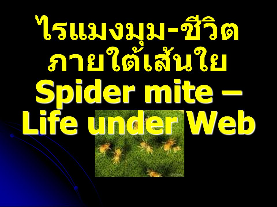 ไรแมงมุม-ชีวิตภายใต้เส้นใยSpider mite – Life under Web