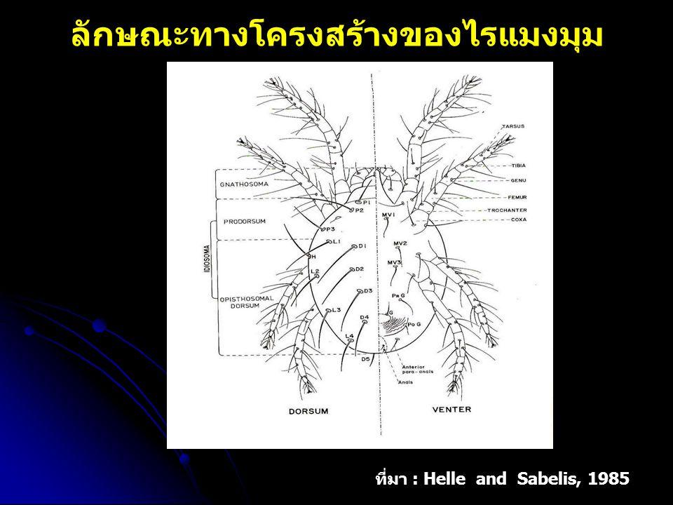 ลักษณะทางโครงสร้างของไรแมงมุม