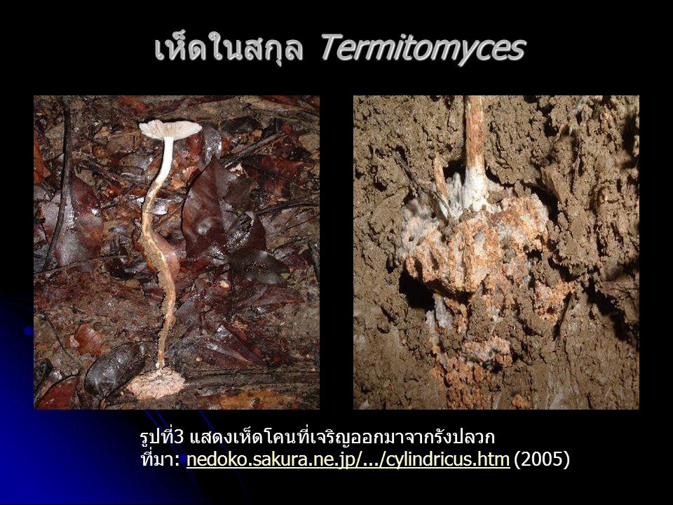เห็ดในสกุล Termitomyces