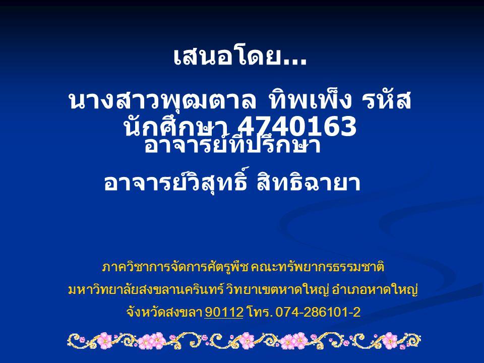 นางสาวพุฒตาล ทิพเพ็ง รหัสนักศึกษา 4740163