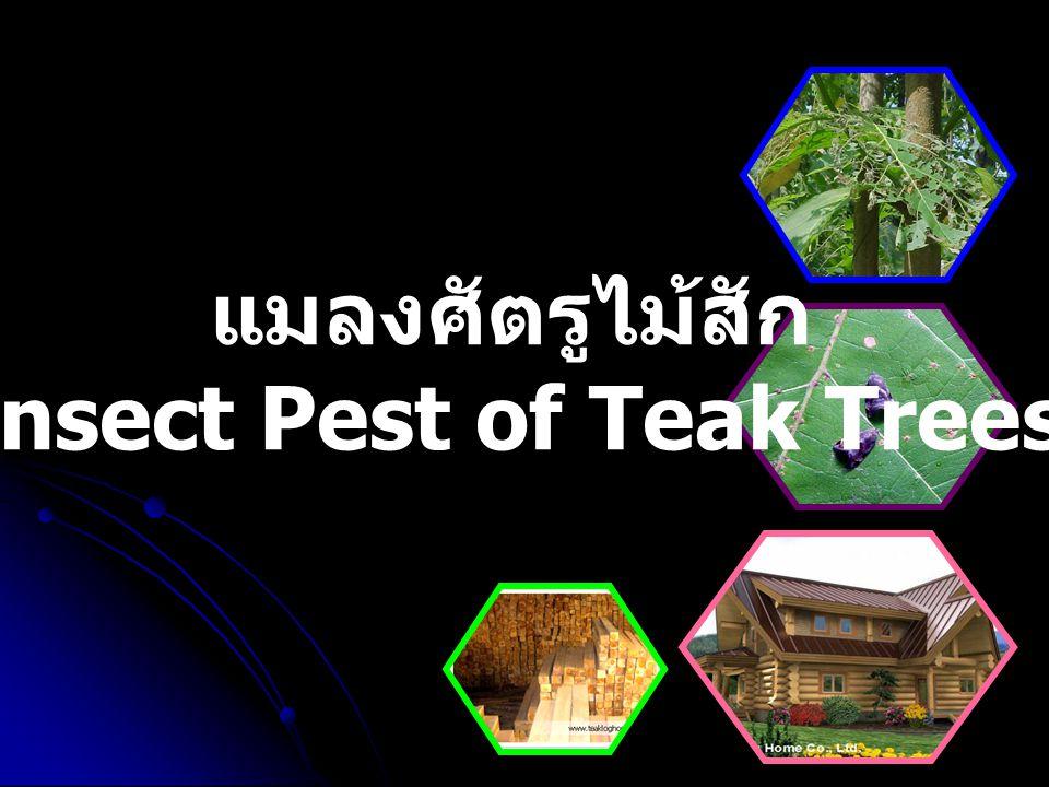 แมลงศัตรูไม้สัก Insect Pest of Teak Trees
