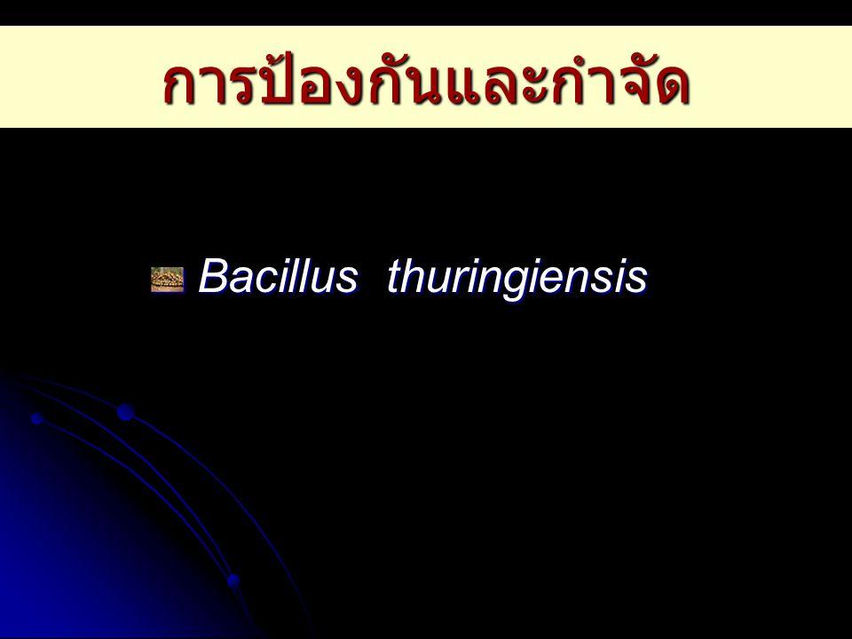 การป้องกันและกำจัด Bacillus thuringiensis