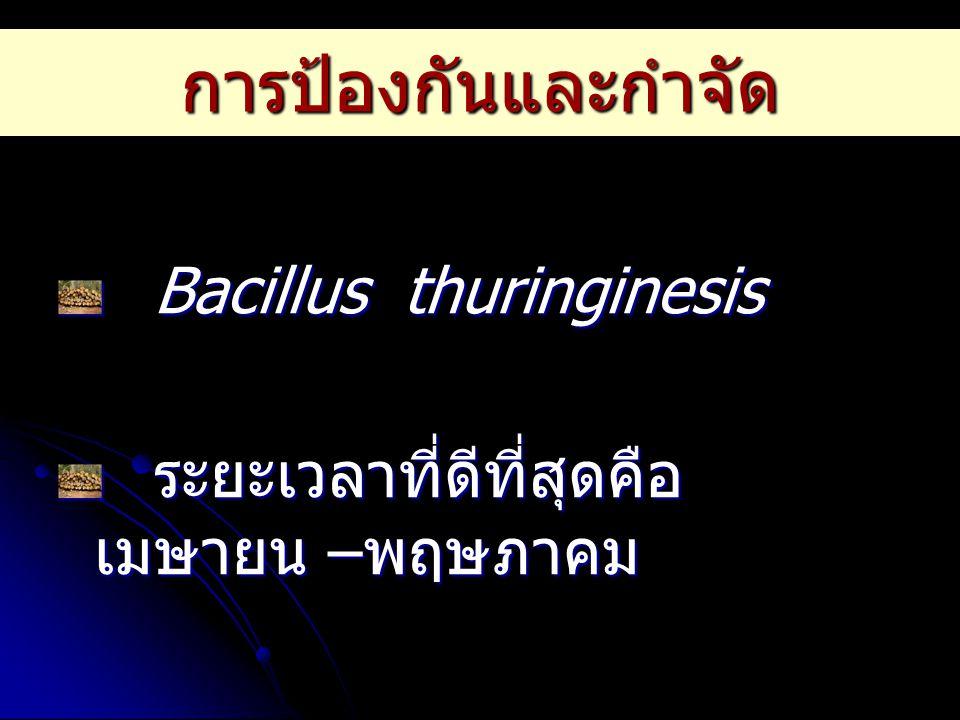 การป้องกันและกำจัด Bacillus thuringinesis