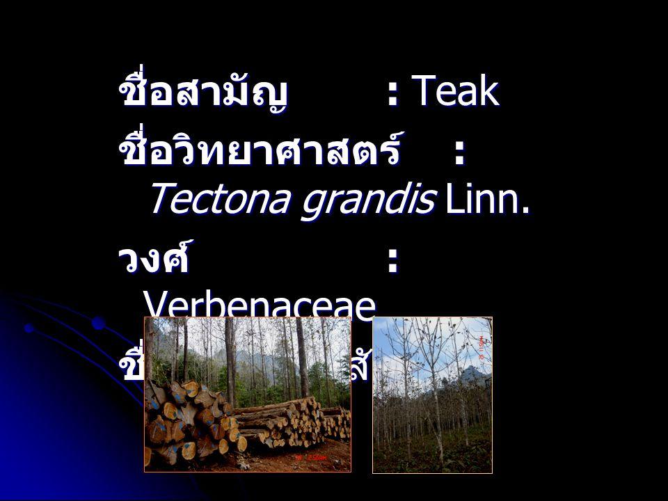 ชื่อสามัญ : Teak ชื่อวิทยาศาสตร์ : Tectona grandis Linn.