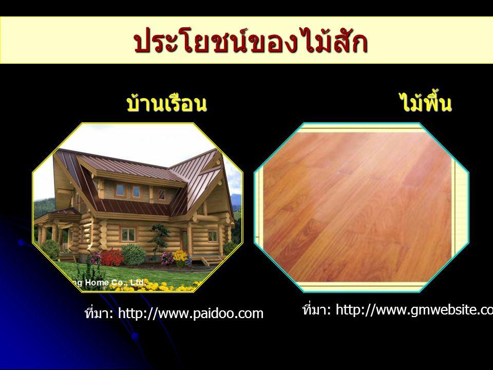 ประโยชน์ของไม้สัก บ้านเรือน ไม้พื้น ที่มา: http://www.gmwebsite.com