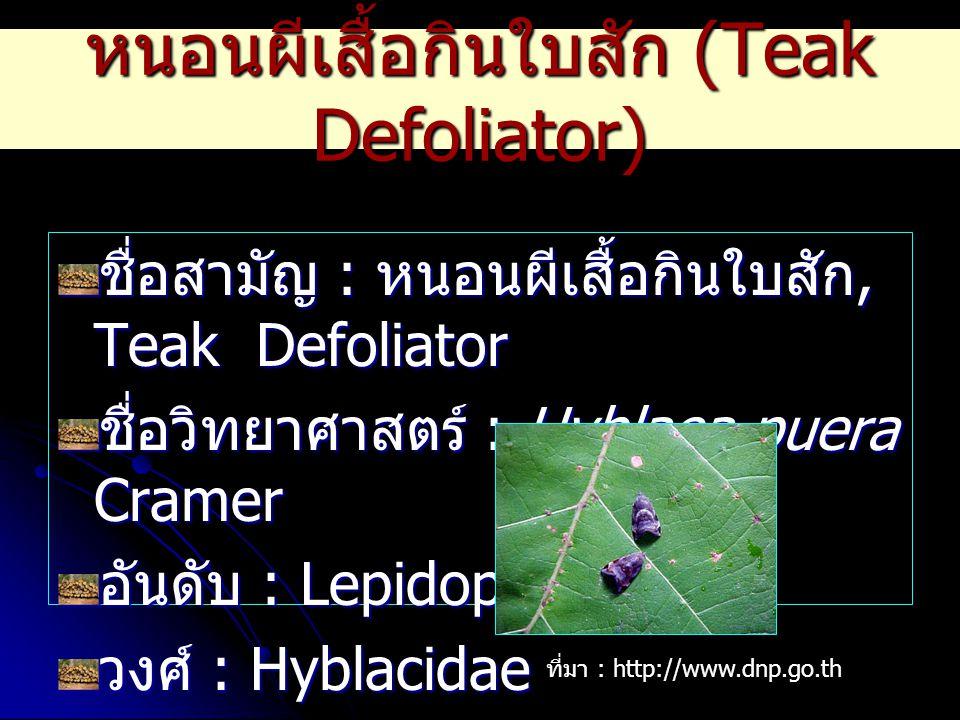 หนอนผีเสื้อกินใบสัก (Teak Defoliator)