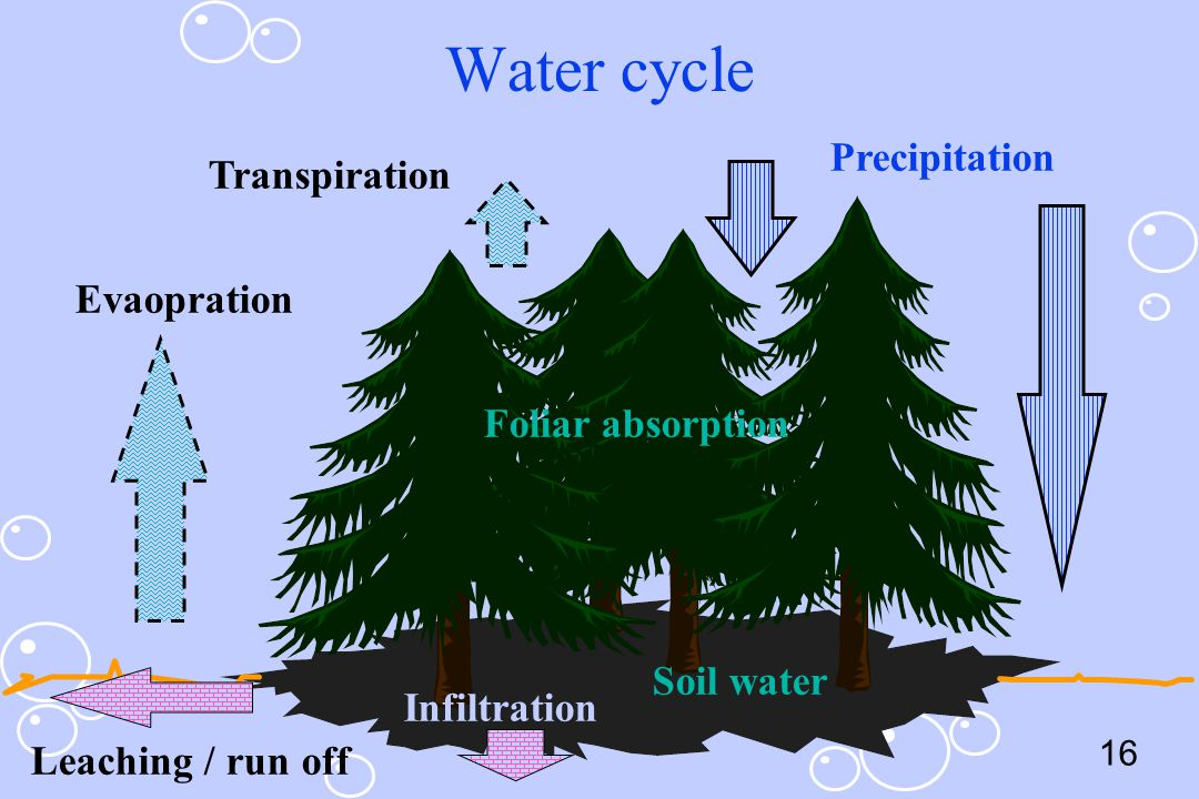 Water cycle Precipitation Transpiration Evaopration Foliar absorption