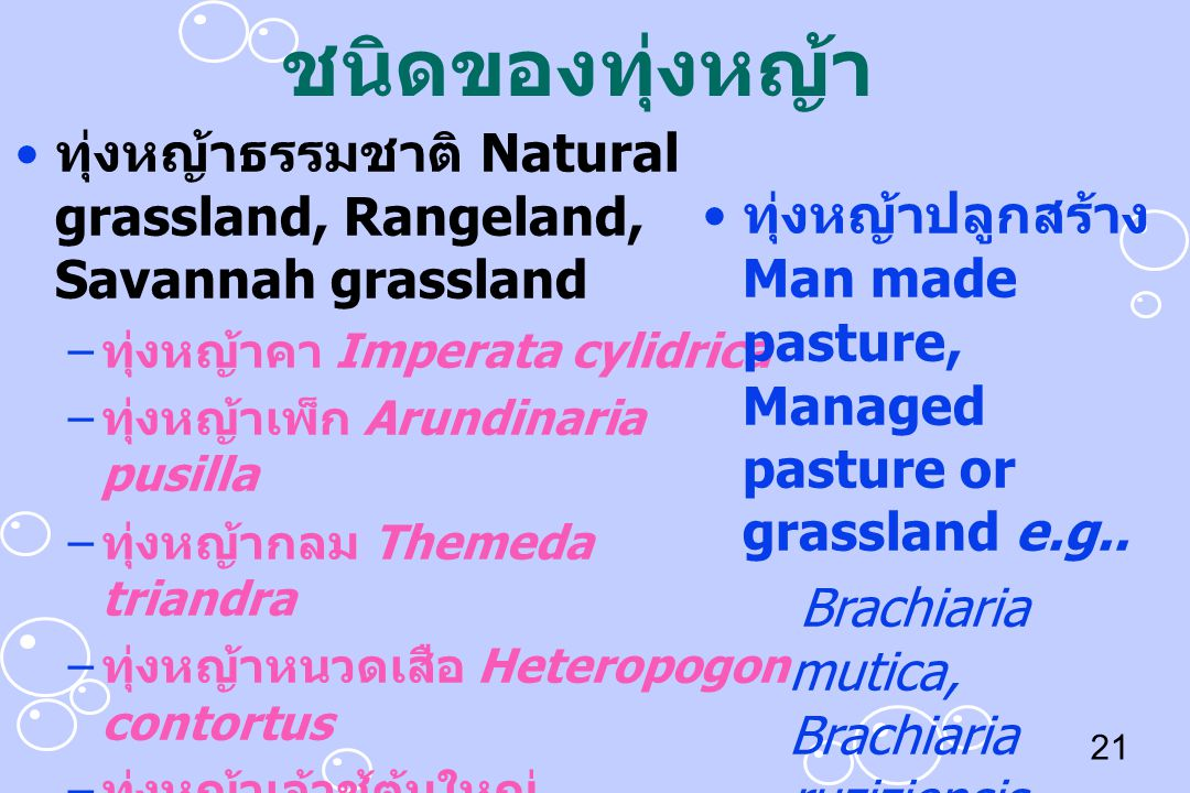 ชนิดของทุ่งหญ้า ทุ่งหญ้าธรรมชาติ Natural grassland, Rangeland, Savannah grassland. ทุ่งหญ้าคา Imperata cylidrica.