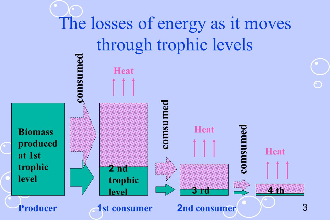 The losses of energy as it moves through trophic levels