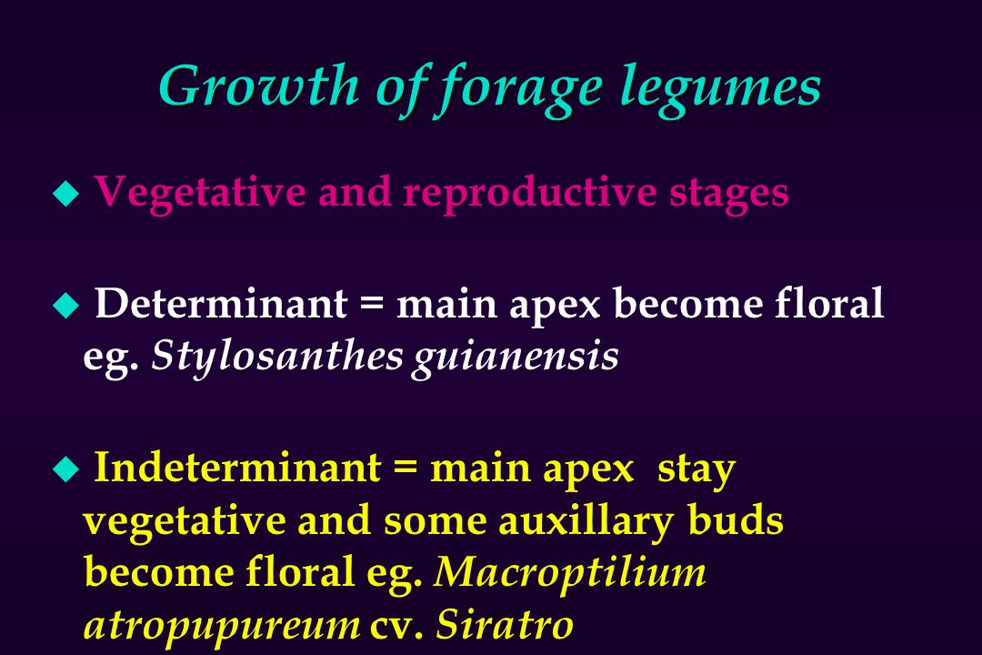 Growth of forage legumes
