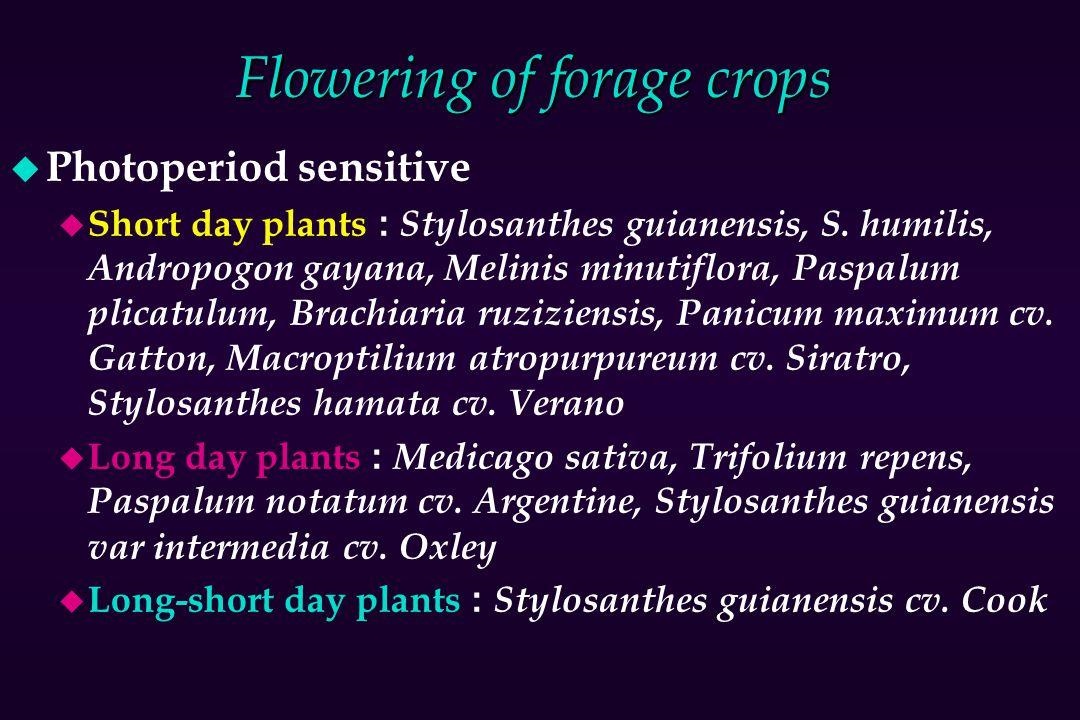 Flowering of forage crops