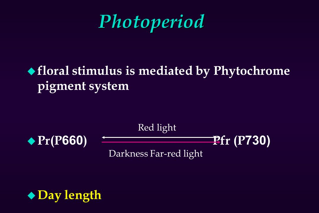 Photoperiod floral stimulus is mediated by Phytochrome pigment system